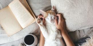 Żwirek dla kota ze srebrem